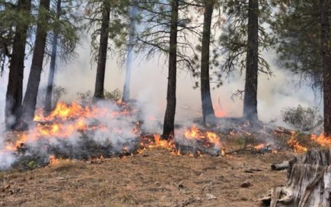 Forest fires spread along Clackamas and Klamath County